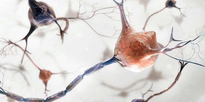 "Células madre ""reprogramadas"" implantadas en pacientes con Parkinson"