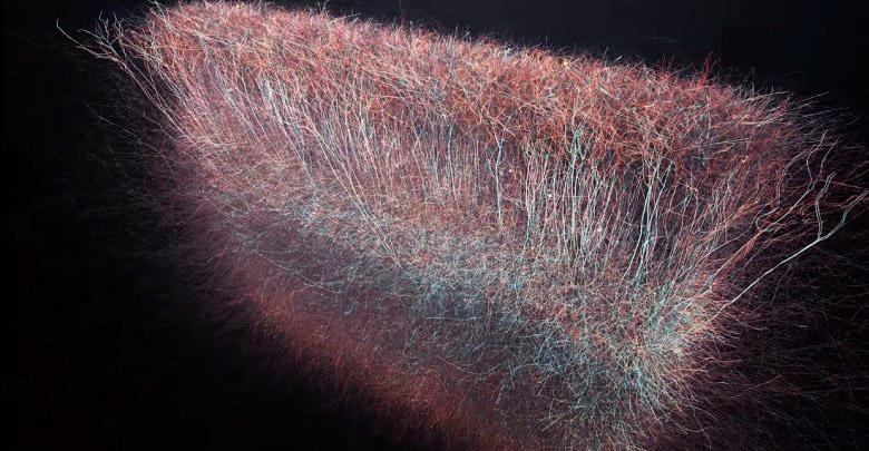 universo multidimensional dentro del cerebro