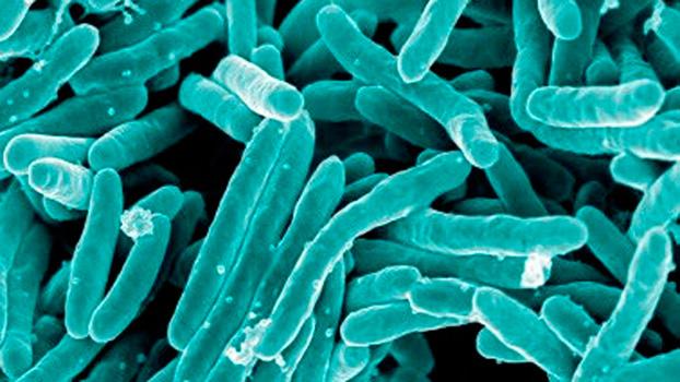 Las 7 bacterias más letales del mundo