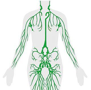 Que es ganglio linfático