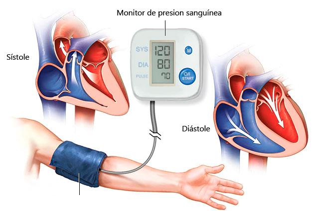 Cómo medir la presión arterial