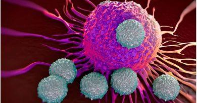 ¿Qué son las células T?